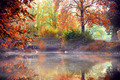 Fall Forest 1 - PhotoDune Item for Sale