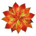 Autumn-Leaves-Blossom - PhotoDune Item for Sale