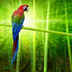 Big parrot - PhotoDune Item for Sale