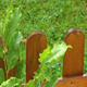 Raining on Green Plant and Wood Fence - VideoHive Item for Sale