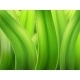 Grass Macro Background - GraphicRiver Item for Sale