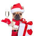 santa calus dog - PhotoDune Item for Sale
