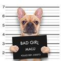 mugshot dog - PhotoDune Item for Sale