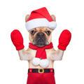 christmas dog - PhotoDune Item for Sale