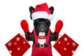santa selfie dog - PhotoDune Item for Sale