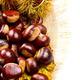 Sweet chestnut on white background. - PhotoDune Item for Sale