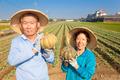 asian senior couple farmer holding pumpkin on his farm. - PhotoDune Item for Sale
