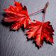 autumn maple leaves - PhotoDune Item for Sale