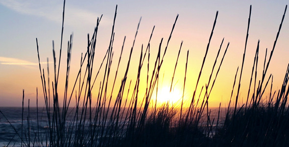 VideoHive Early Morning Beach 9321103