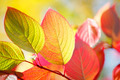 Colorful autumn leaves - PhotoDune Item for Sale