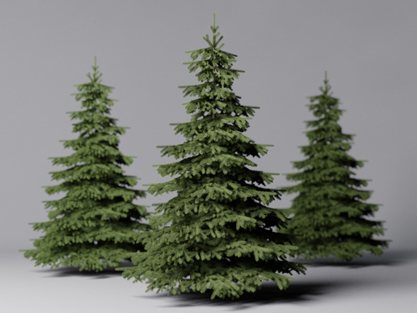 Fir Tree - 3DOcean Item for Sale