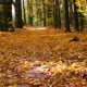Autumn Leaf Fall in Calm Weather - VideoHive Item for Sale