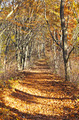 Pathway through the autumn forest - PhotoDune Item for Sale