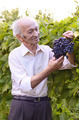 Senior happy farmer at vineyard - PhotoDune Item for Sale