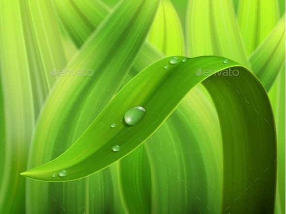 GraphicRiver Water Drop on Grass Macro 9332922