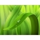 Water Drop on Grass Macro - GraphicRiver Item for Sale