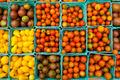 Organic Tomatoes - PhotoDune Item for Sale
