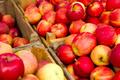 Organic Apples - PhotoDune Item for Sale