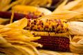 Organic Corn - PhotoDune Item for Sale
