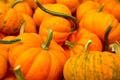 Organic Pumpkins - PhotoDune Item for Sale