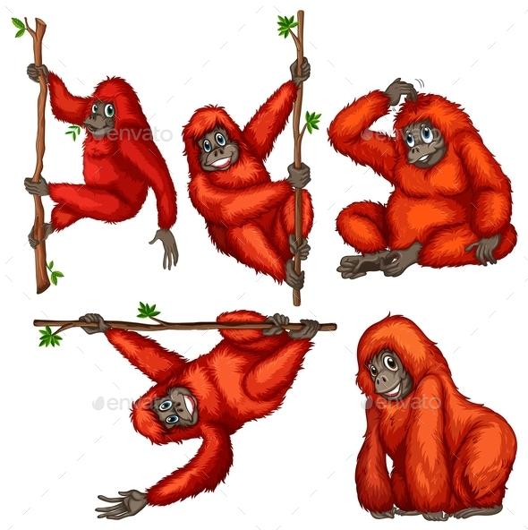 GraphicRiver Orangutan 9336662