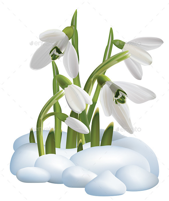 GraphicRiver Spring Snowdrop Flowers on a Snow 9337529