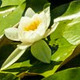 Flying Over Pond Lily - VideoHive Item for Sale