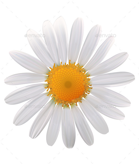 GraphicRiver Daisy Flower 9337858