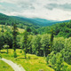 Flying Above Green Forest - VideoHive Item for Sale