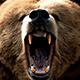 bearbite