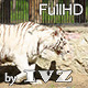 White Tigress - VideoHive Item for Sale