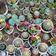 many cacti in pots - PhotoDune Item for Sale