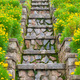mossy stone staircase among yellow flowers - PhotoDune Item for Sale