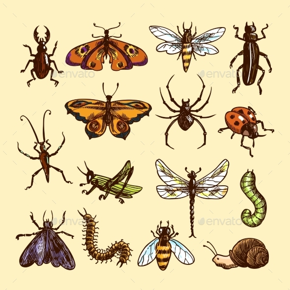 GraphicRiver Insects Sketch Set 9345507