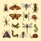 Insects Sketch Set - GraphicRiver Item for Sale