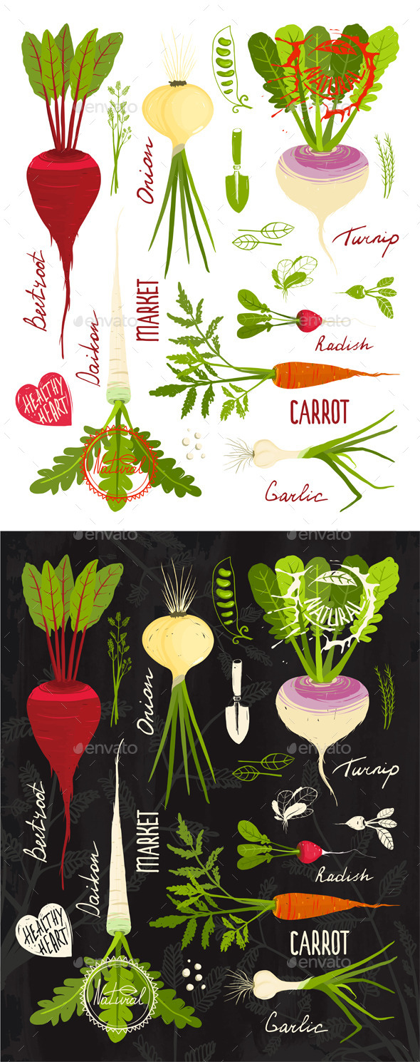 GraphicRiver Root Vegetables with Greens Signs and Symbols 9352732
