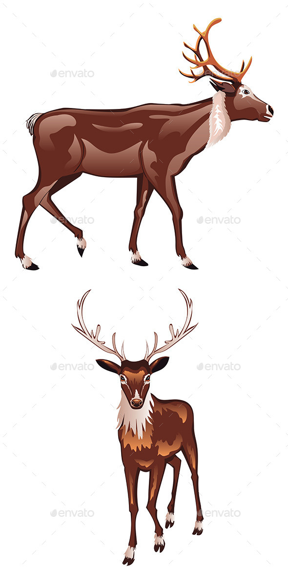 GraphicRiver Brown Deer 9361795