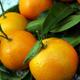 Tangerine - PhotoDune Item for Sale