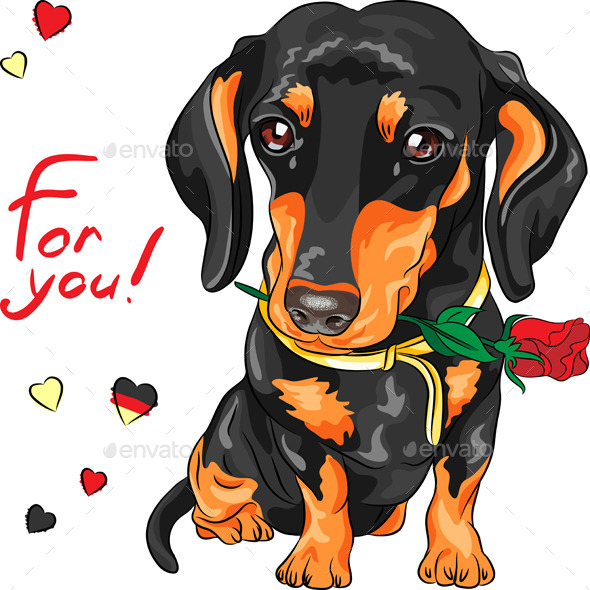 GraphicRiver Dachshund with Red Flower 9363161