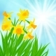 Daffodils Background - GraphicRiver Item for Sale