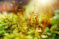 Moss flower - PhotoDune Item for Sale