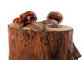 Snails family on pine-tree stump - PhotoDune Item for Sale