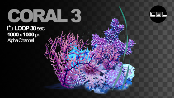 Coral 3
