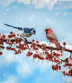 Birds  In Winter - PhotoDune Item for Sale