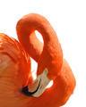 Pink Flamingo Portrait - PhotoDune Item for Sale