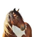 Horse Portrait - PhotoDune Item for Sale