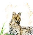 Serval Portrait - PhotoDune Item for Sale