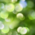 natural background - PhotoDune Item for Sale