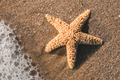 Starfish into the waves - PhotoDune Item for Sale