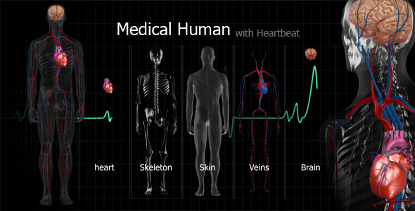 Medical Human - 3DOcean Item for Sale
